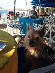 Spike at breakfast at The Office in Cabo