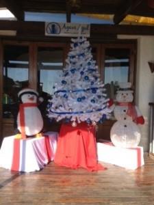 Agave Azul Christmas Tree Cabo